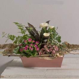 Coupe de plantes lucky interflora wikifleurs for Catalogue plantes vertes