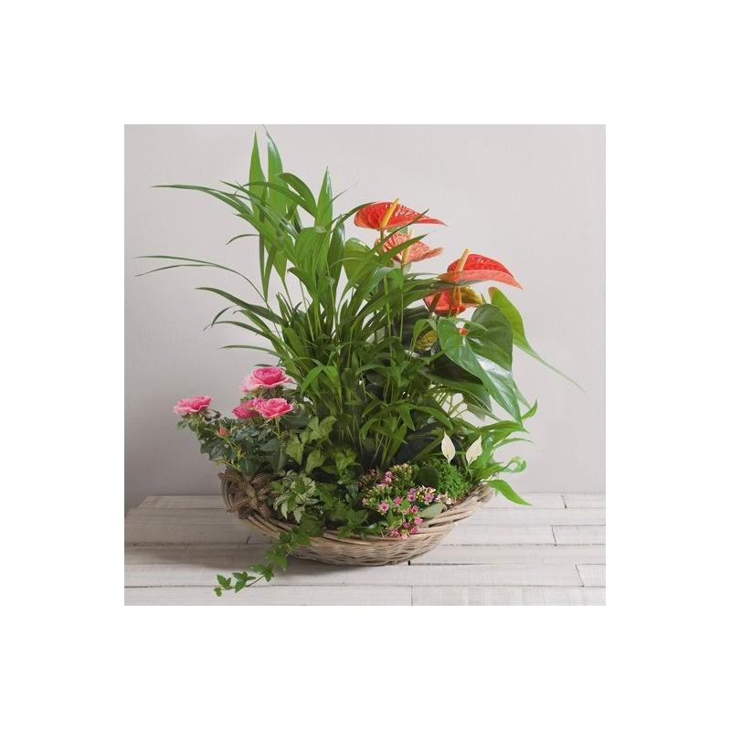 Composition de plantes eden interflora for Catalogue plantes vertes