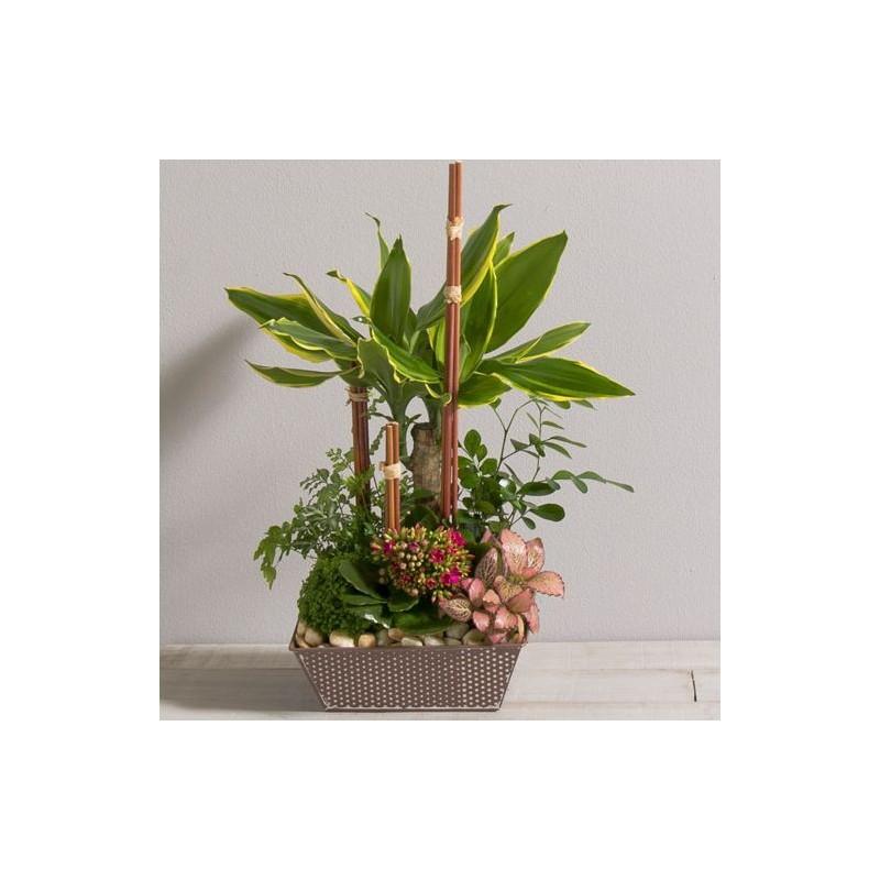 coupe de plantes mikado corse interflora wikifleurs. Black Bedroom Furniture Sets. Home Design Ideas