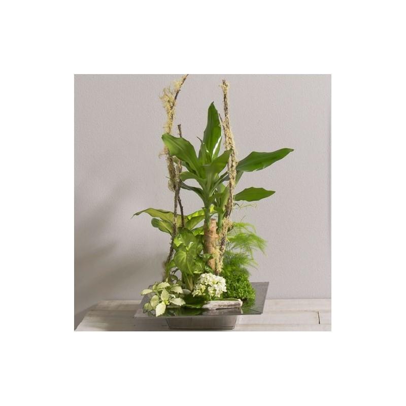 coupe de plantes allure interflora wikifleurs. Black Bedroom Furniture Sets. Home Design Ideas