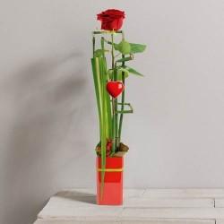 Coupe rose et blanche deuil interflora - Composition st valentin ...