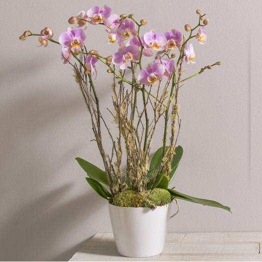 Livraison de fleurs paris fleurs paris fleuriste paris for Livraison plantes paris