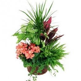 Assemblage plantes vertes suisse for Livraison fleurs geneve