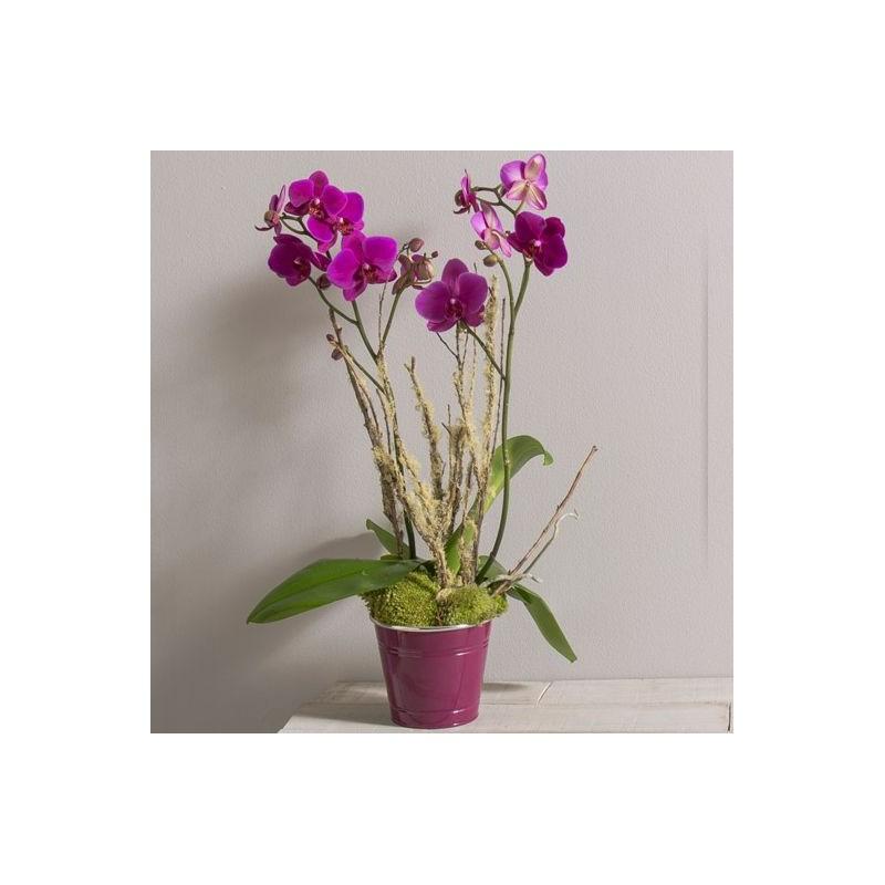 orchidee wiki