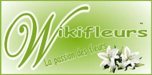 Wikifleurs
